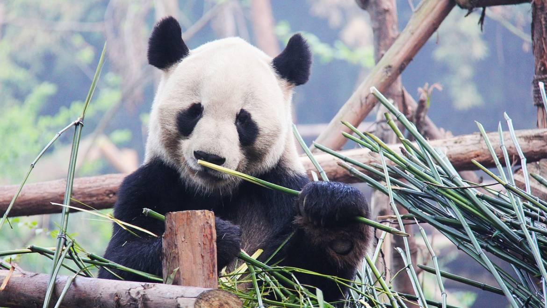 ¿Qué es Google Panda? El algoritmo que cambió el SEO